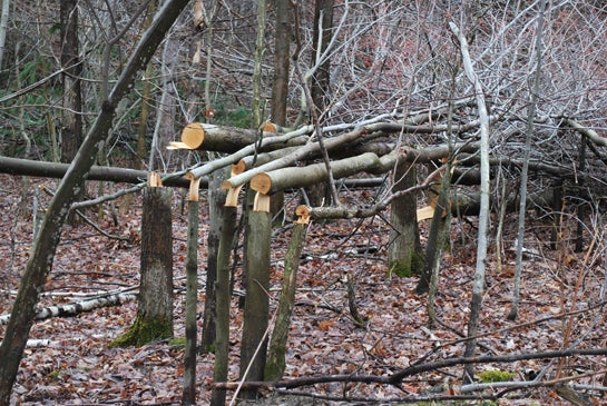 Brush Piles: Make An Instant Food Source for Wildlife