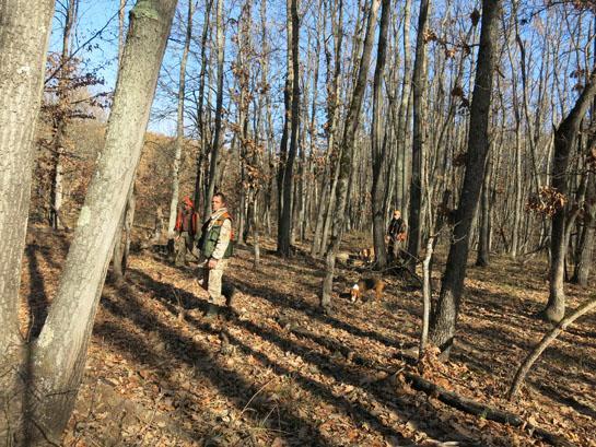 httpswww.outdoorlife.comsitesoutdoorlife.comfilesimport2014importBlogPostembedbulgarianboar_17.jpg