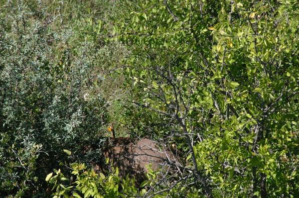 httpswww.outdoorlife.comsitesoutdoorlife.comfilesimport2014importImage2010photo30010FordRanch_168.jpg
