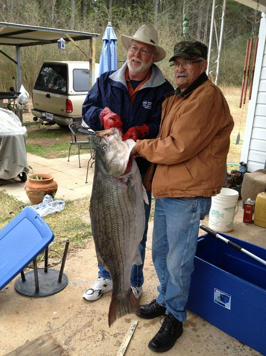 Potential World Record Striped Bass Caught in Black Warrior River, Alabama