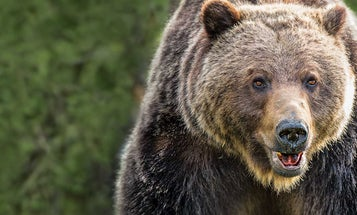 The Return of the Grizzly, and Bear Hunting, in the West