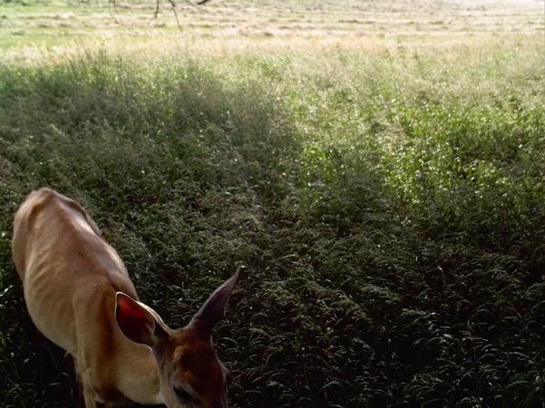 httpswww.outdoorlife.comsitesoutdoorlife.comfilesimport2014importImage2010photo30010RQ18.jpg
