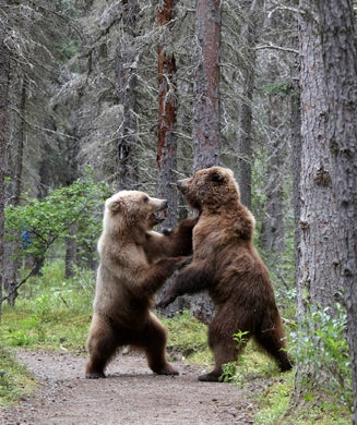 Photos: Two Brown Bears Duke it Out in Katmai National Park