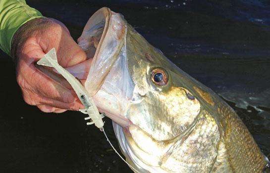 Better Baits for Winter Snook