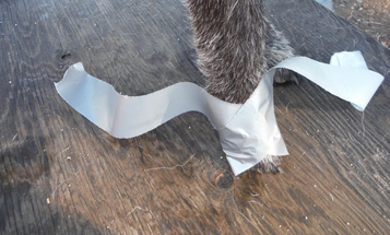 How to Make Duct-Tape Booties for Your Footsore Dog