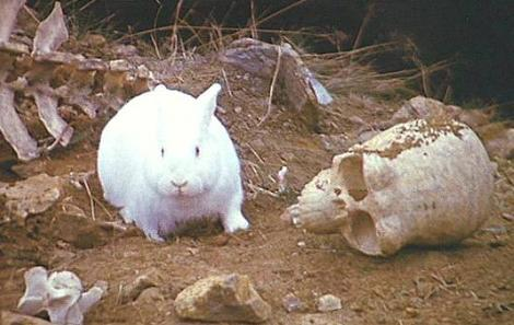 Bad News Bunnies: Rabbits Wreak Havoc at Denver Airport