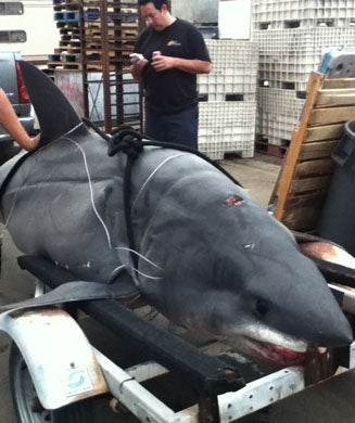First Look: Potential World Record Mako Shark