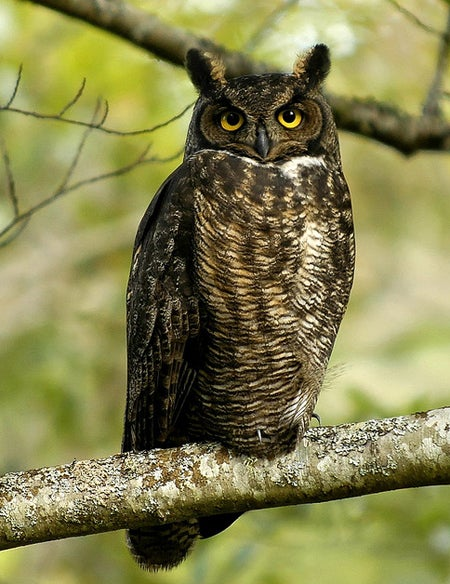 an owl sitting on a branch.