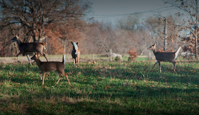 Weston, Massachusetts Becomes Unlikely Battleground for Public Hunting Access