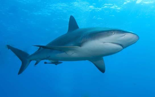 Study: Sharks Approach Humans from Behind, Can Tell Which Way We're Facing