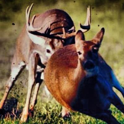 Deer Hunting: When a Whitetail Chase is Really a Chase