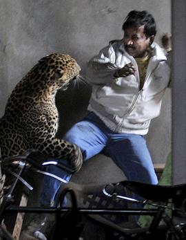 Graphic Image Warning: Leopard Scalps Man in Brutal Attack