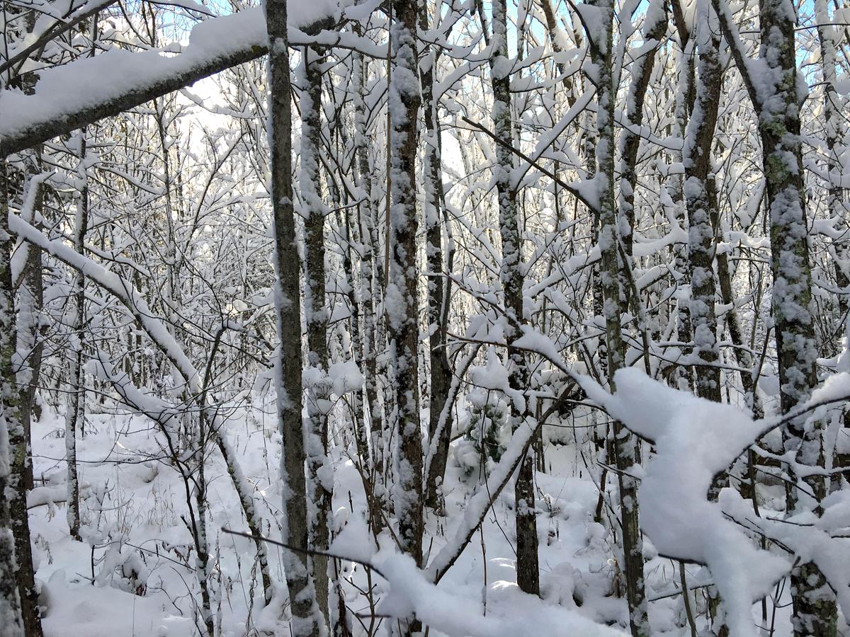 Winter: The Deer Season of Daydreaming