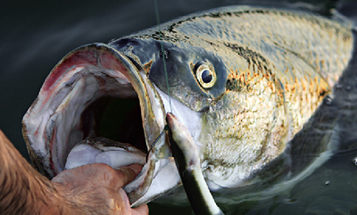Hurricane Sandy Aftermath: State of Fishing in New Jersey