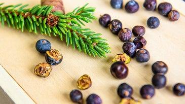 juniper berries for wild game