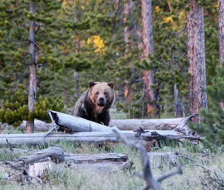 Bear Victim Sues Guide, Church Group
