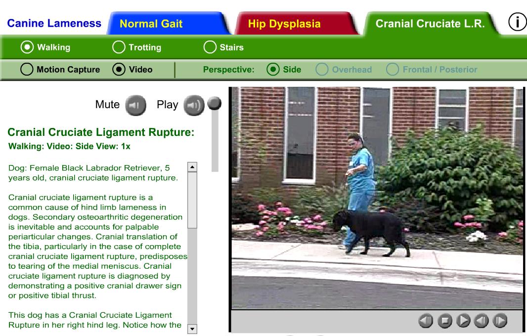 VIDEO: Canine Lameness