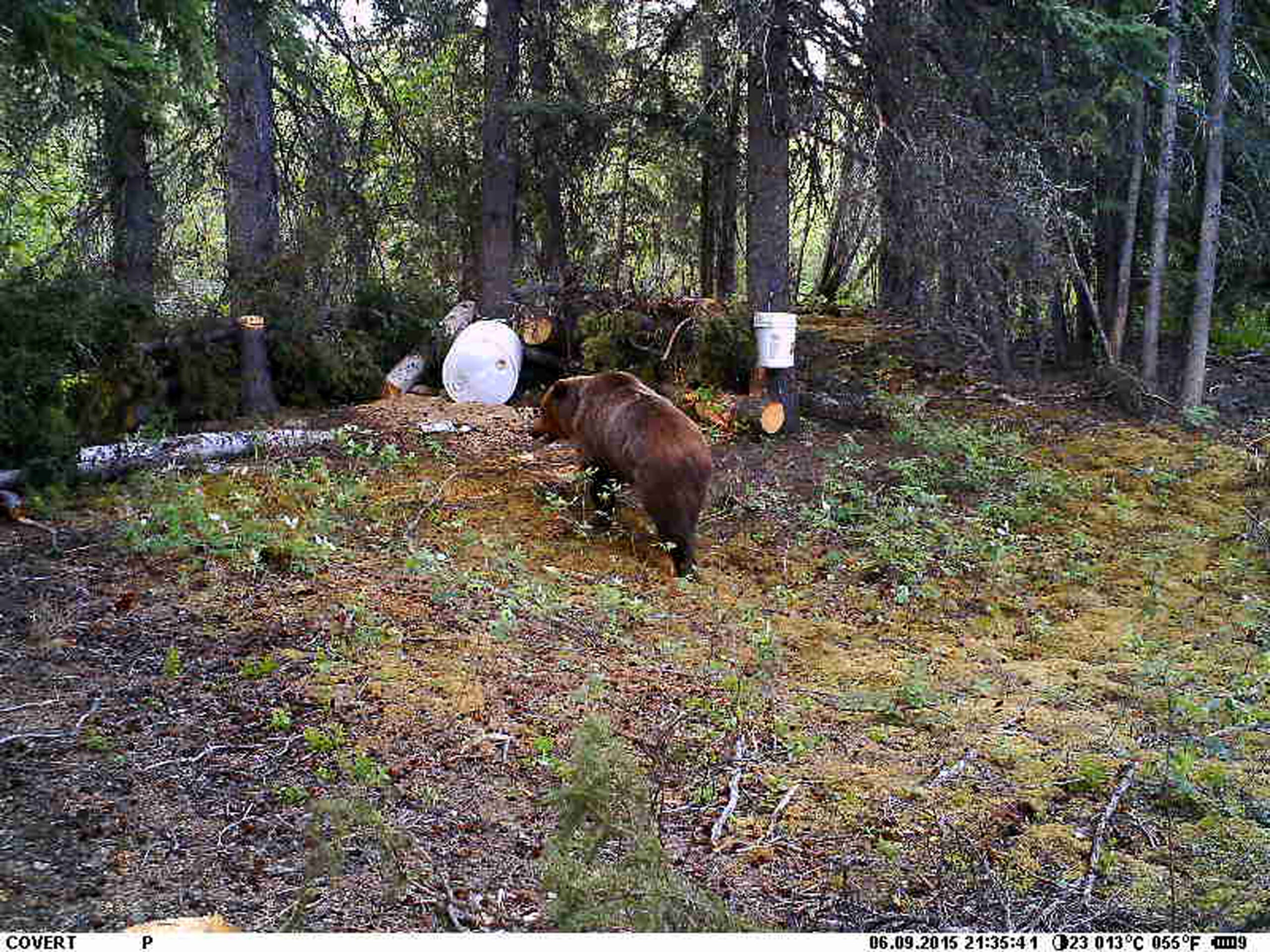 Expect the Unexpected: When Grizzly Bears Charge