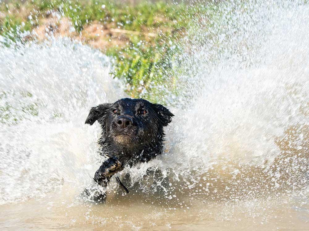 canine hazards