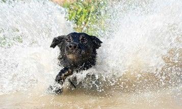 5 Ways to Kill Your Hunting Dog