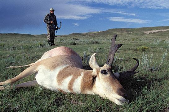 Bowhunting Tactics for Early-Season Pronghorn