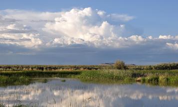 Beyond Malheur: Why Federal Wildlife Refuges Matter So Much