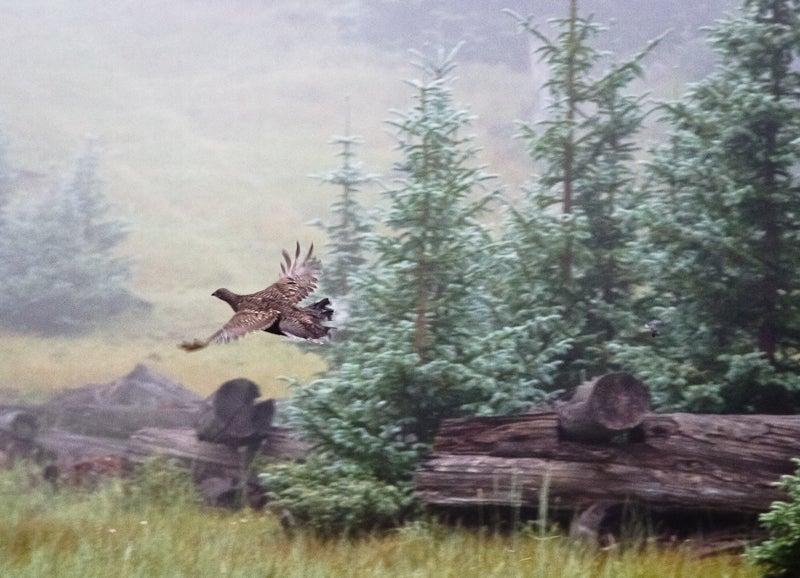 httpswww.outdoorlife.comsitesoutdoorlife.comfilesimport2014importImage2010photo30010NMGrandSlamJA-8.jpg