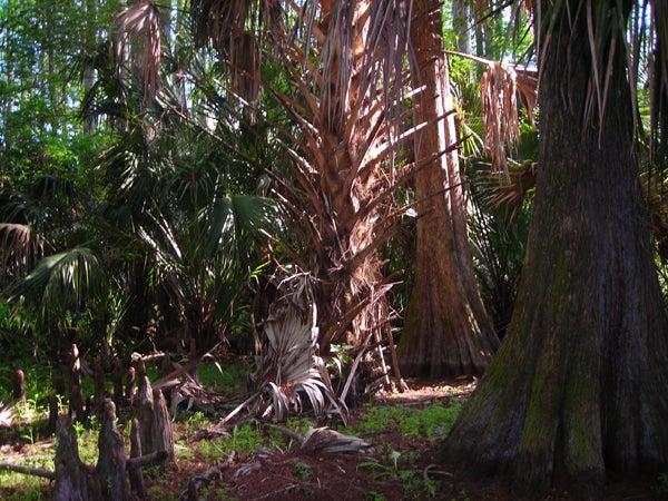 httpswww.outdoorlife.comsitesoutdoorlife.comfilesimport2014importImage2011photo10013215796_florida_chasing_2_march_2011_0612.jpg