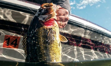 How To Tackle Topwater Bass