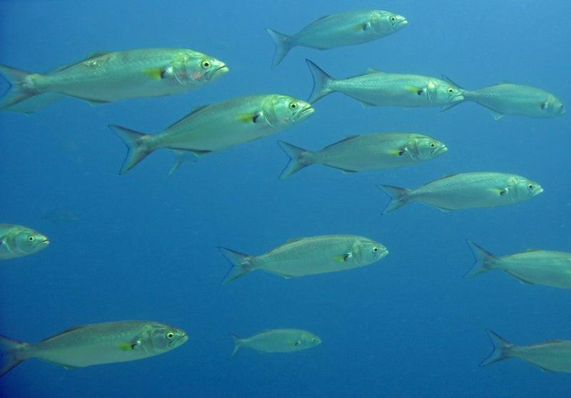 """bluefish"