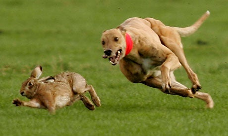 Northern Ireland Bans Hare Coursing