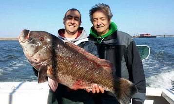 New Jersey Blackfish: How to Catch the Next World Record Tautog