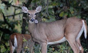Harsh Winter Causes Wisconsin To Cut Antlerless Permits in Northern Units
