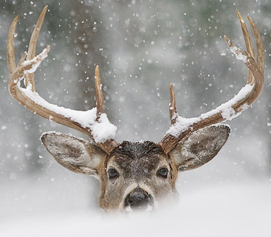 Whitetails This Weekend: Focus On Food And Weather