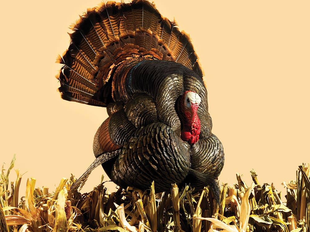 turkey decoy gear test