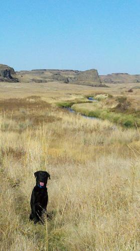 Why You Need At Least Two Hunting Dogs
