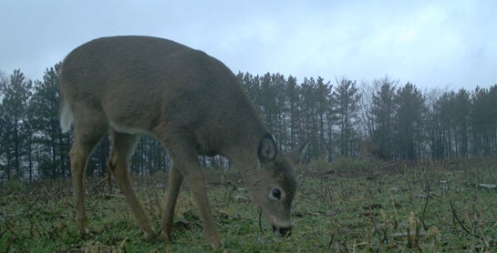 Rut Tracker 2012: The Rut (Mostly) Winding Down