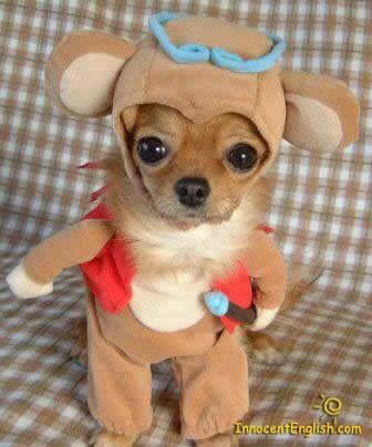 httpswww.outdoorlife.comsitesoutdoorlife.comfilesimport2014importImage2009photo7cutest-puppy-halloween-costume-pic54.jpg