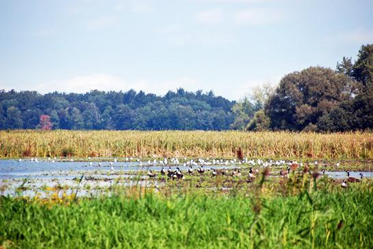 Public Land: Hunting and Fishing in Mississippi