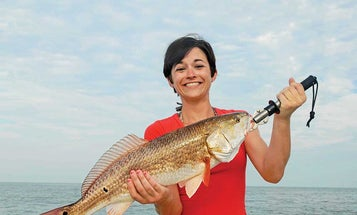 Alabama Slammin': How to Fish the Gulf on a Budget