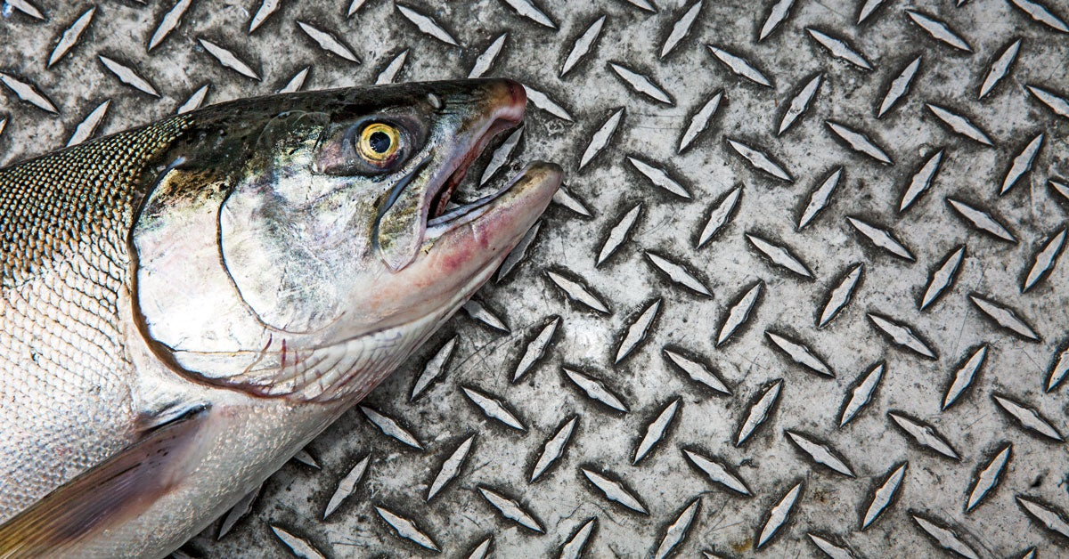 The Bite: Salmon Fishing the Columbia River
