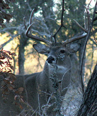 When is the Whitetail Rut?