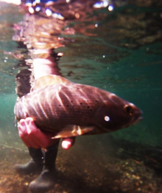 Fishing For Grayling: Chasing Alaska's Sailfish on the Fly