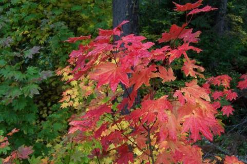 httpswww.outdoorlife.comsitesoutdoorlife.comfilesimport2014importImage2009photo7Decfoliage_65.jpg