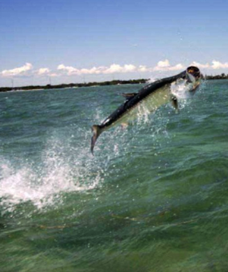 Best Hunting and Fishing Photos from OL Readers, July 2013