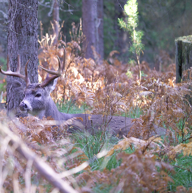 Would You Shoot a Deer in its Bed?