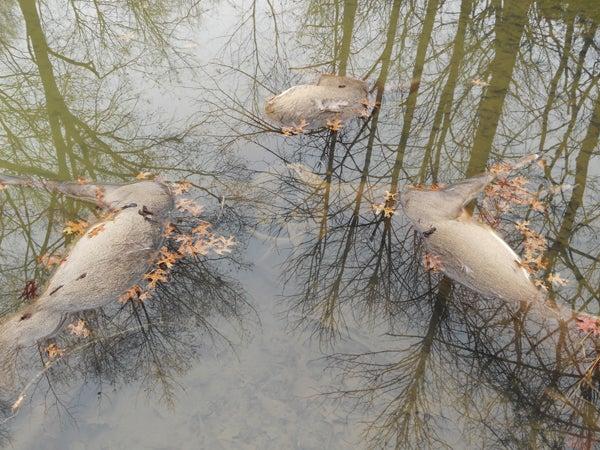 httpswww.outdoorlife.comsitesoutdoorlife.comfilesimport2013images2010125_22.jpg