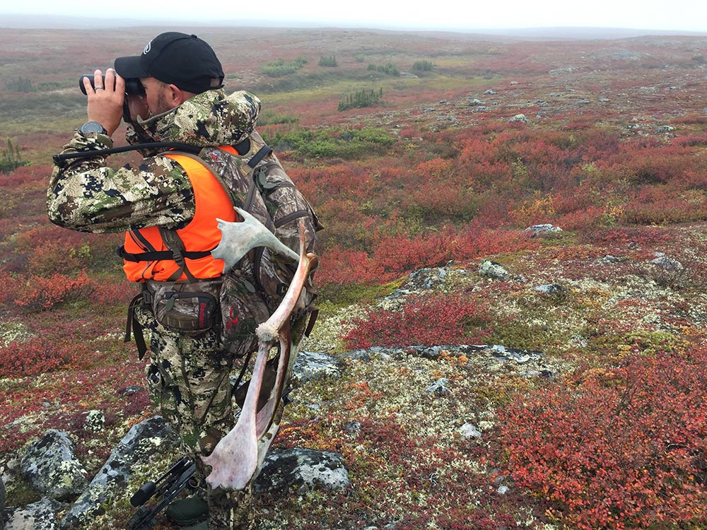 glassing for caribou