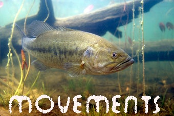 Get Your Pre-Spawn Bass