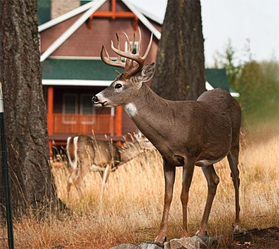 httpswww.outdoorlife.comsitesoutdoorlife.comfilesimport2014importBlogPostembedODL0913_HUN01.jpg